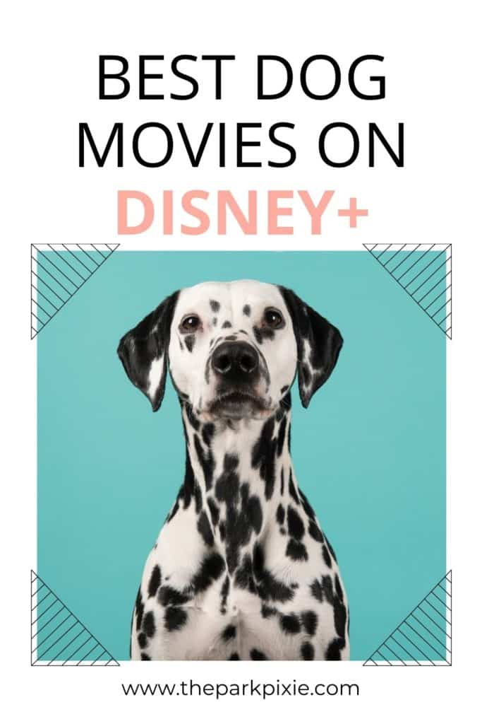 """Photo of a Dalmatian dog posing in front of a teal background. Text above reads """"Best Dog Movies on Disney Plus."""""""
